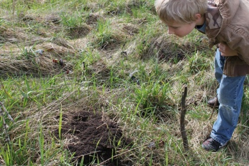 Checking out an ant hill