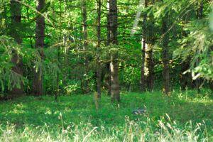 North woods.