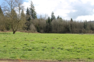 Another view of the front pasture