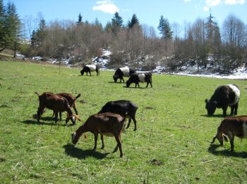 Upper pasture.